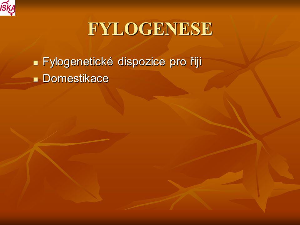 FYLOGENESE Fylogenetické dispozice pro říji Fylogenetické dispozice pro říji Domestikace Domestikace