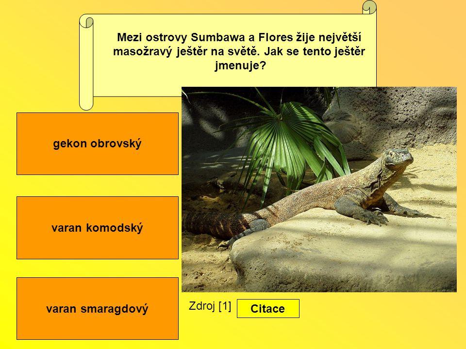 varan komodský varan smaragdový gekon obrovský Mezi ostrovy Sumbawa a Flores žije největší masožravý ještěr na světě.