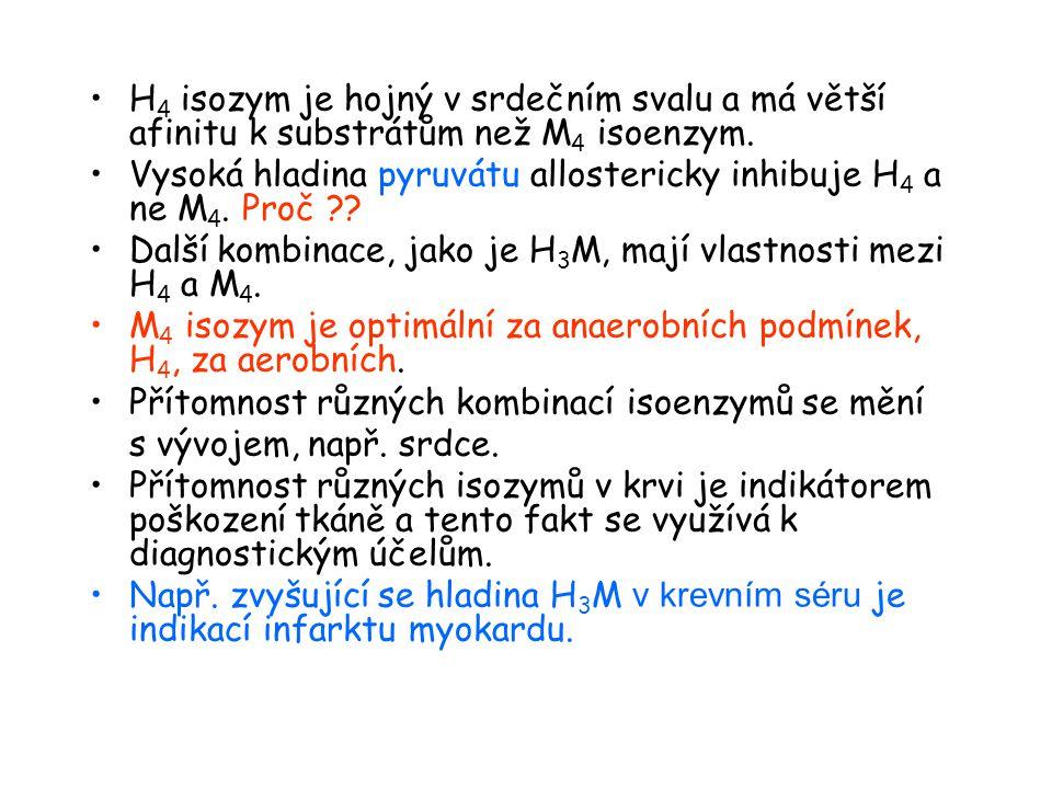 Isozymy LDH – krysí srdeční sval.Krysí srdeční LDH isoenzym.