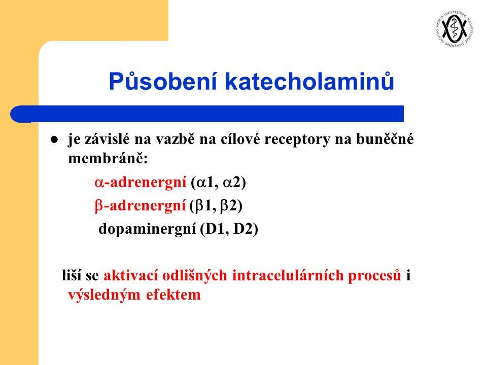 Působení katecholaminů je závislé na vazbě na cílové receptory na buněčné membráně:  -adrenergní (  1,  2)  -adrenergní (  1,  2) dopaminergní (