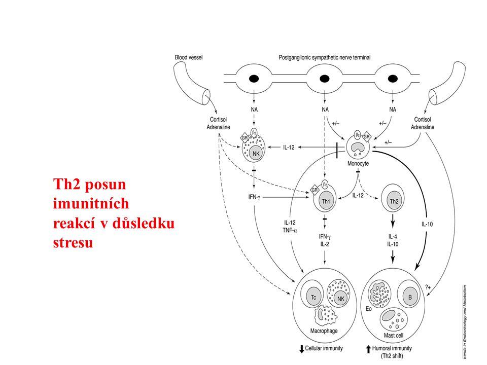 Th2 posun imunitních reakcí v důsledku stresu