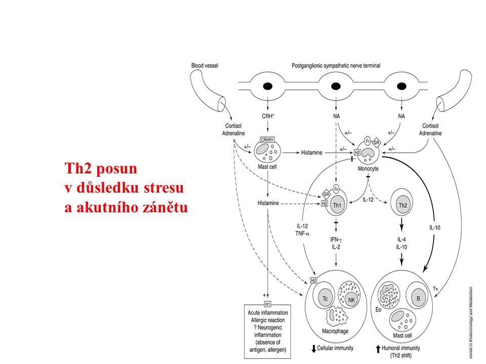 Th2 posun v důsledku stresu a akutního zánětu