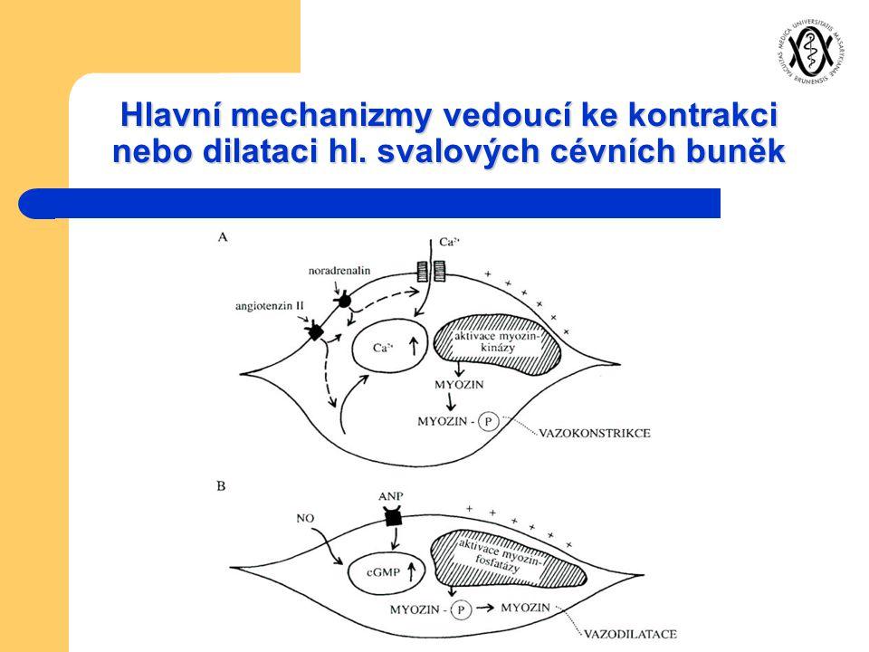 Hlavní mechanizmy vedoucí ke kontrakci nebo dilataci hl. svalových cévních buněk