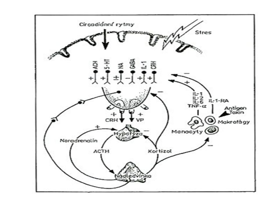 Release CRF v mozku aktivuje chování spojené se stavem strachu (úzkosti)  bdělost (pozornost)  freezing  behaviorální reaktivita inhibuje chování, které není spojeno se stresem rozmnožování jídlo Akutní odpověď na stres: alterace v chování v důsledku releasu CRF
