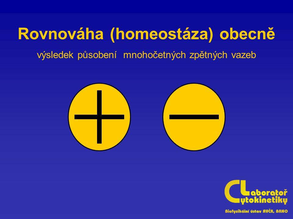 Rovnováha (homeostáza) obecně výsledek působení mnohočetných zpětných vazeb