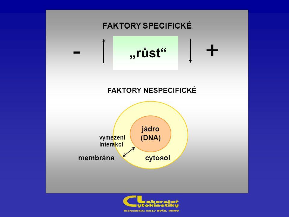 """FAKTORY SPECIFICKÉ FAKTORY NESPECIFICKÉ membrána +- cytosol jádro (DNA) """"růst vymezení interakcí"""