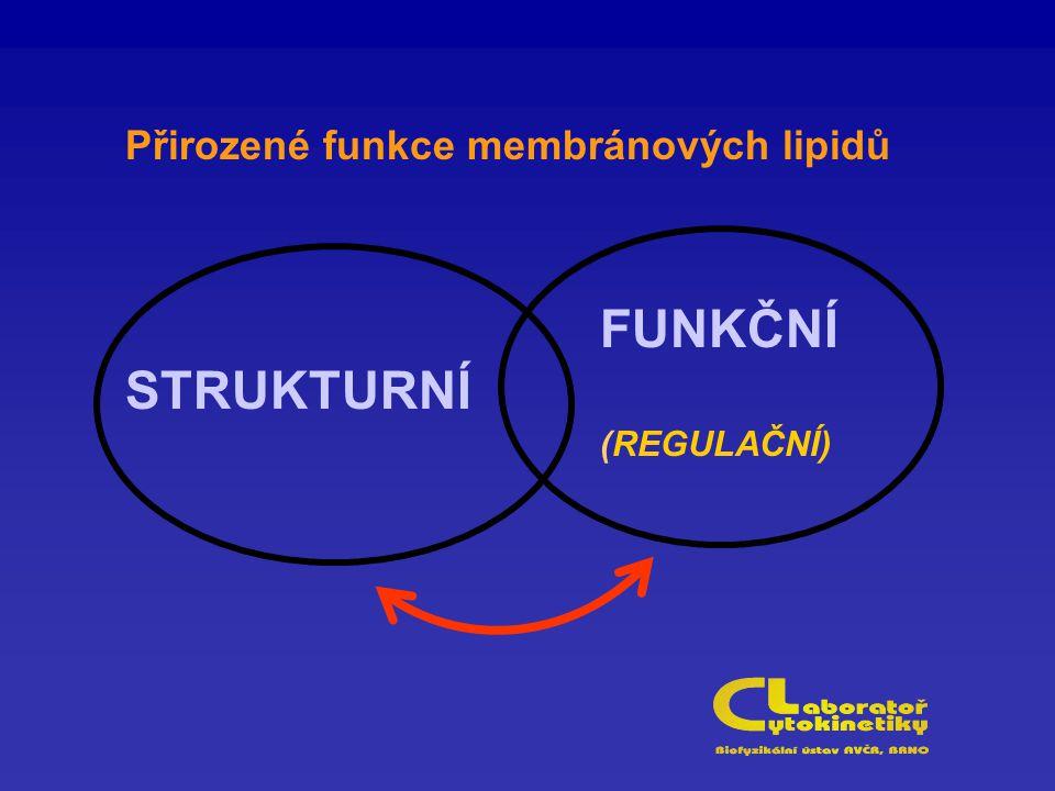 Přirozené funkce membránových lipidů STRUKTURNÍ FUNKČNÍ (REGULAČNÍ)