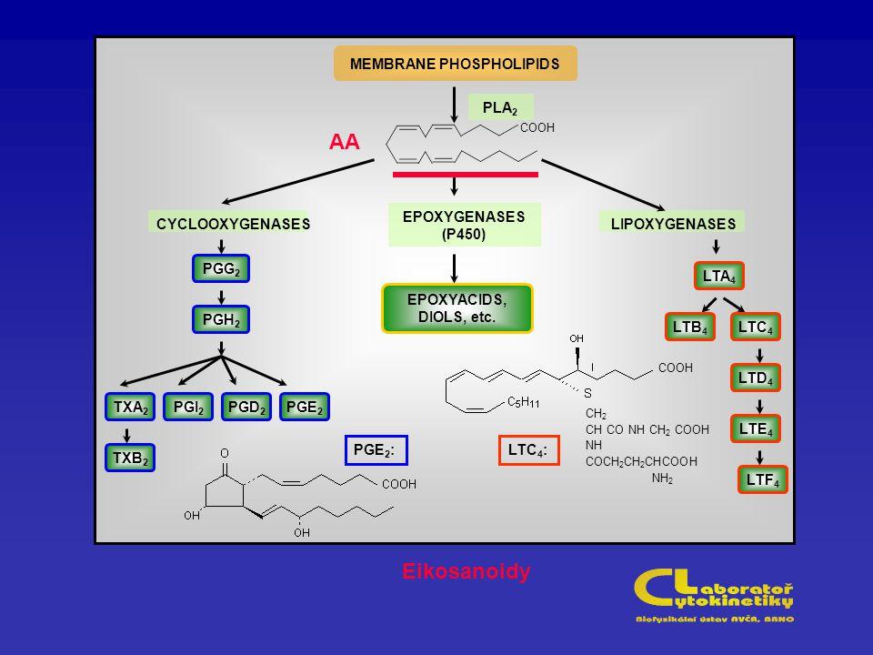 MEMBRANE PHOSPHOLIPIDS CYCLOOXYGENASES EPOXYGENASES (P450) LIPOXYGENASES CH 2 CH CO NH CH 2 COOH NH COCH 2 CH 2 CHCOOH NH 2 COOH LTA 4 LTF 4 LTE 4 LTD 4 LTC 4 LTB 4 EPOXYACIDS, DIOLS, etc.