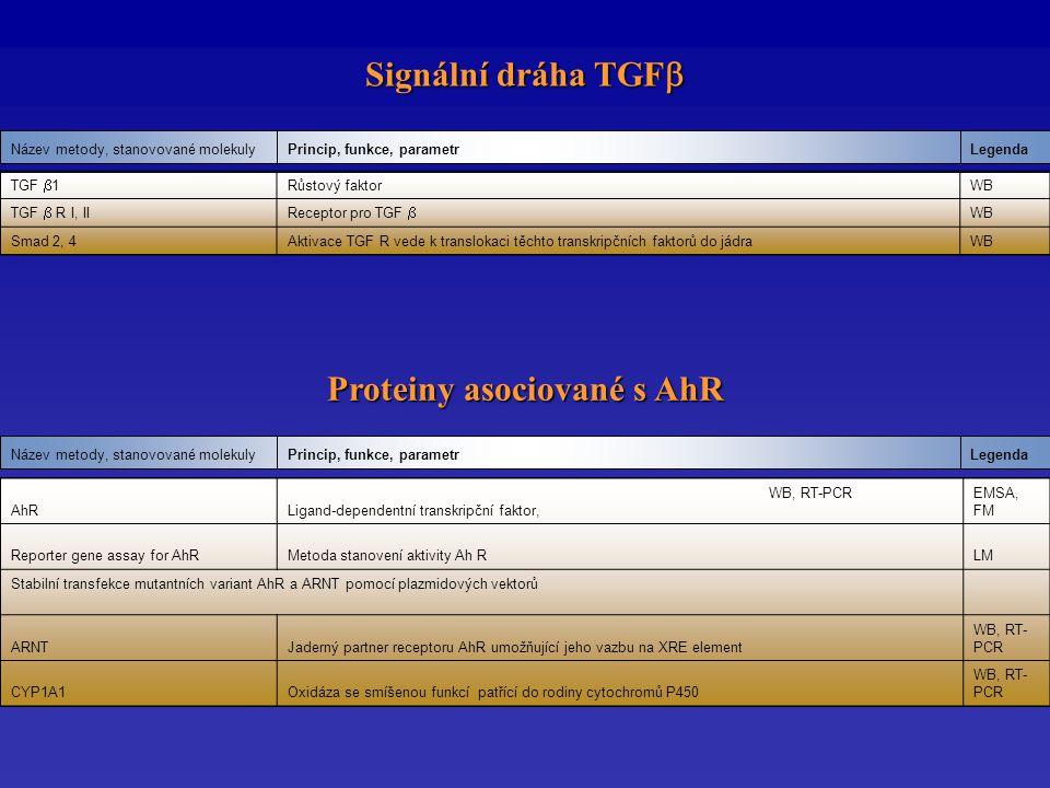 Signální dráha TGF  LegendaPrincip, funkce, parametrNázev metody, stanovované molekuly LegendaPrincip, funkce, parametrNázev metody, stanovované molekuly Proteiny asociované s AhR AhR WB, RT-PCR Ligand-dependentní transkripční faktor, EMSA, FM Reporter gene assay for AhRMetoda stanovení aktivity Ah RLM Stabilní transfekce mutantních variant AhR a ARNT pomocí plazmidových vektorů ARNTJaderný partner receptoru AhR umožňující jeho vazbu na XRE element WB, RT- PCR CYP1A1Oxidáza se smíšenou funkcí patřící do rodiny cytochromů P450 WB, RT- PCR TGF  1 Růstový faktorWB TGF  R I, IIReceptor pro TGF  WB Smad 2, 4Aktivace TGF R vede k translokaci těchto transkripčních faktorů do jádraWB