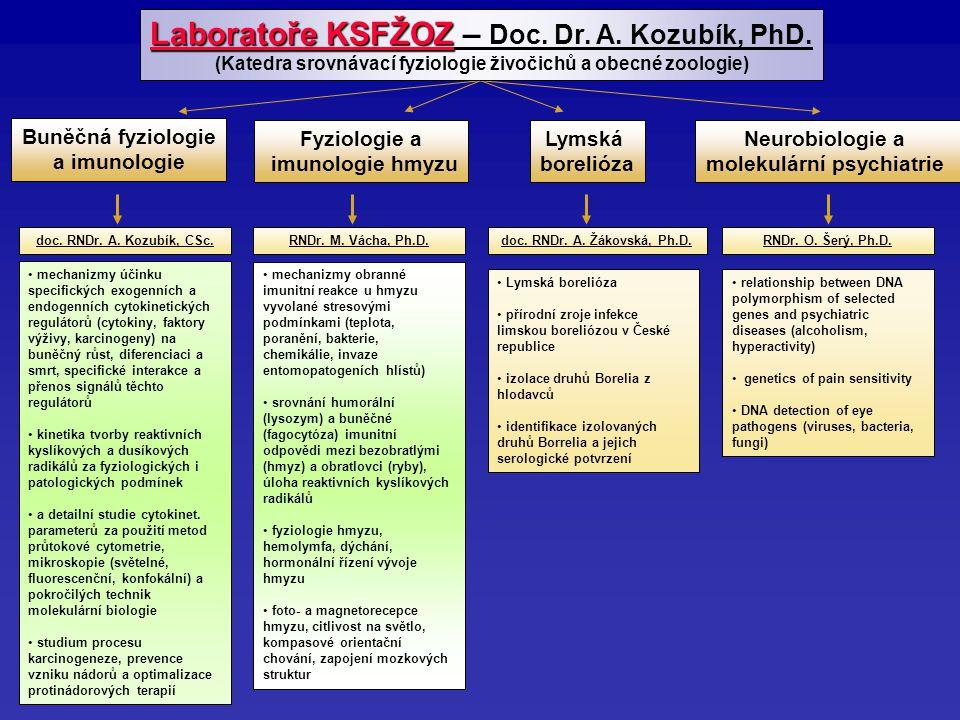 doc. RNDr. A. Kozubík, CSc.RNDr. M. Vácha, Ph.D.doc.