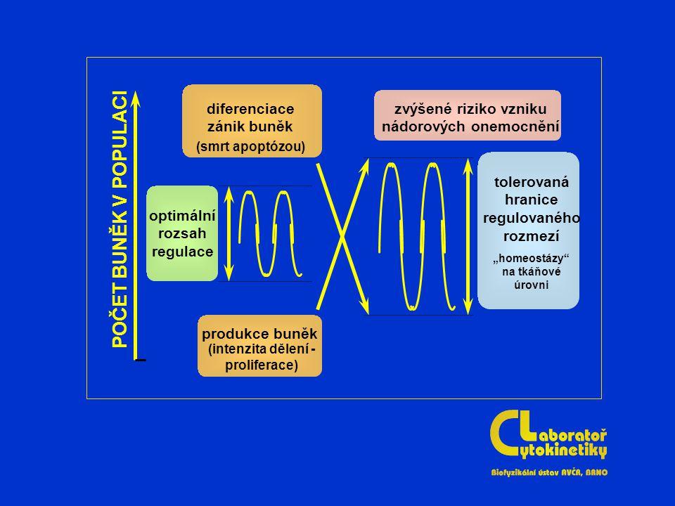 """optimální rozsah regulace tolerovaná hranice regulovaného rozmezí """"homeostázy na tkáňové úrovni diferenciace zánik buněk (smrt apoptózou) produkce buněk (intenzita dělení - proliferace) zvýšené riziko vzniku nádorových onemocnění POČET BUNĚK V POPULACI"""