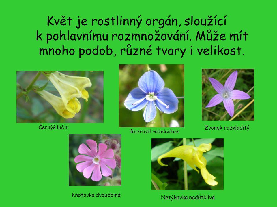 Květ je rostlinný orgán, sloužící k pohlavnímu rozmnožování. Může mít mnoho podob, různé tvary i velikost. Černýš luční Rozrazil rezekvítek Zvonek roz