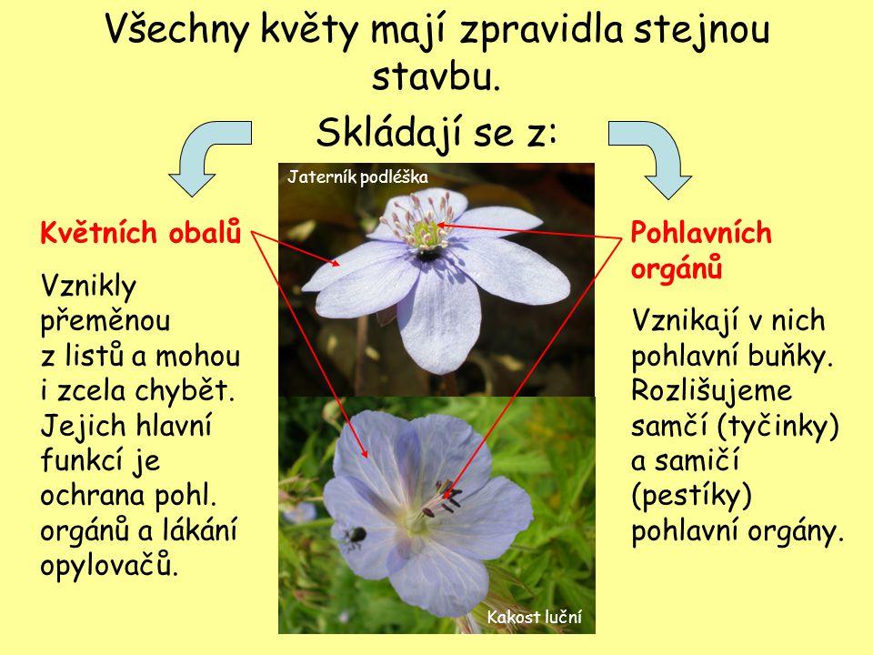 Všechny květy mají zpravidla stejnou stavbu. Skládají se z: Květních obalů Vznikly přeměnou z listů a mohou i zcela chybět. Jejich hlavní funkcí je oc