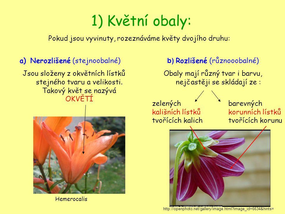 1) Květní obaly: Pokud jsou vyvinuty, rozeznáváme květy dvojího druhu: a)Nerozlišené (stejnoobalné) Jsou složeny z okvětních lístků stejného tvaru a v