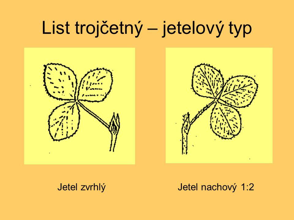 List trojčetný – jetelový typ Jetel nachový 1:2Jetel zvrhlý