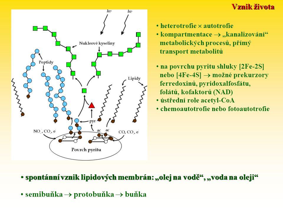 """Vznik života spontánní vznik lipidových membrán: """"olej na vodě , """"voda na oleji semibuňka  protobuňka  buňka heterotrofie  autotrofie kompartmentace  """"kanalizování metabolických procesů, přímý transport metabolitů na povrchu pyritu shluky [2Fe-2S] nebo [4Fe-4S]  možné prekurzory ferredoxinů, pyridoxalfosfátu, folátů, kofaktorů (NAD) ústřední role acetyl-CoA chemoautotrofie nebo fotoautotrofie"""