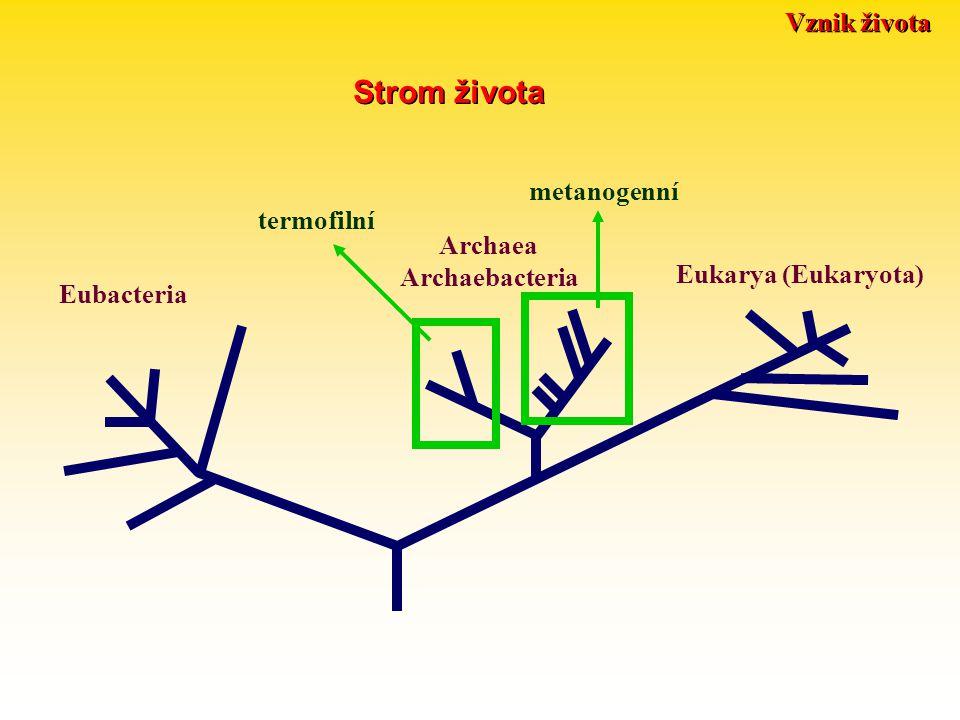 Vznik života Strom života Eubacteria Archaea Archaebacteria Eukarya (Eukaryota) termofilní metanogenní
