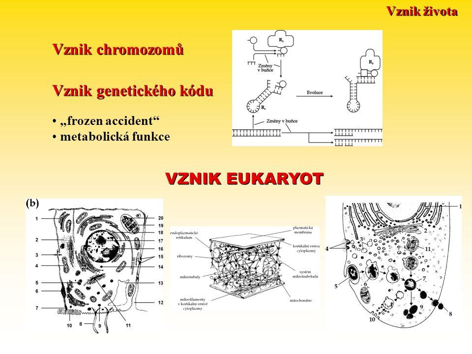"Vznik života Vznik genetického kódu Vznik chromozomů VZNIK EUKARYOT ""frozen accident metabolická funkce"