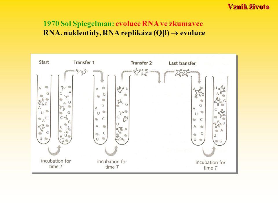 Vznik života 1970 Sol Spiegelman: evoluce RNA ve zkumavce RNA, nukleotidy, RNA replikáza (Q  )  evoluce