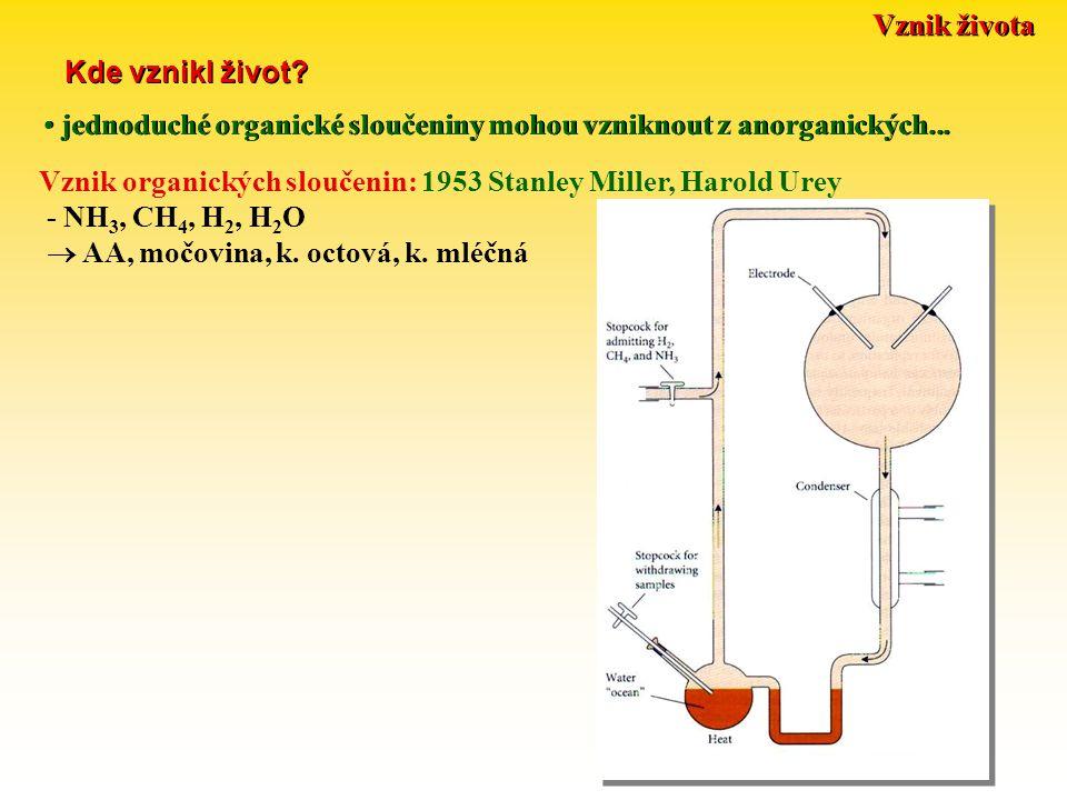 Vznik života Kde vznikl život? Vznik organických sloučenin: 1953 Stanley Miller, Harold Urey - NH 3, CH 4, H 2, H 2 O  AA, močovina, k. octová, k. ml