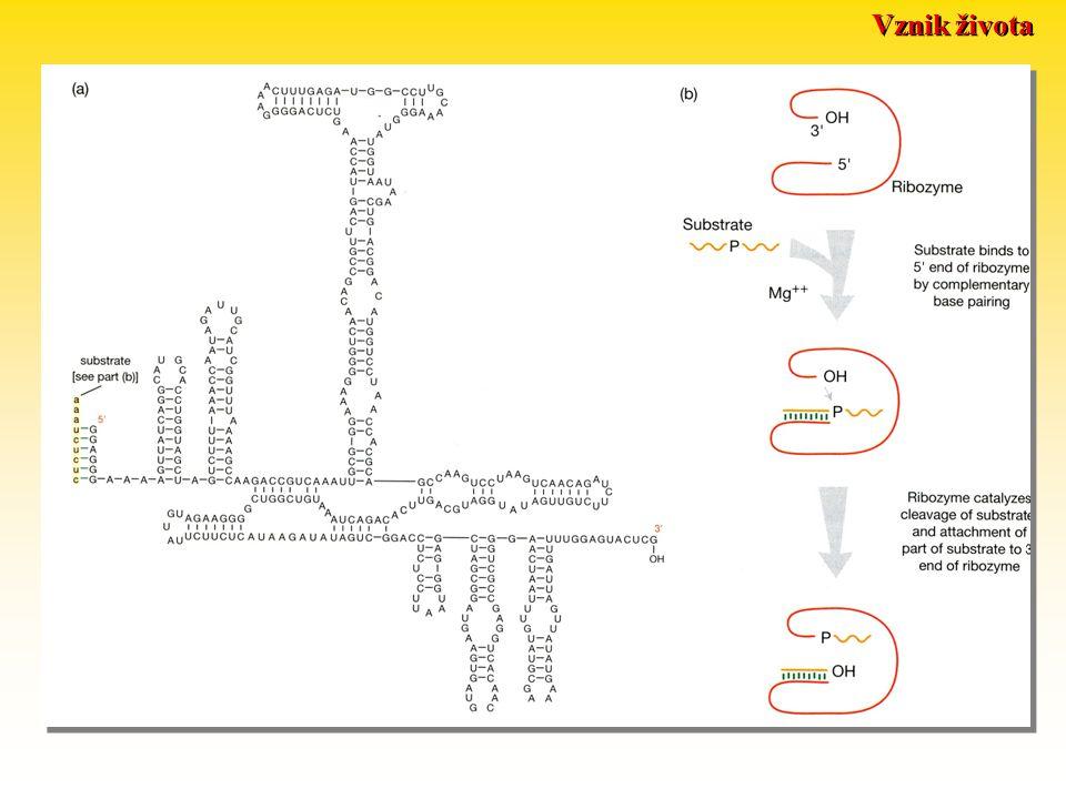 Vznik života katalytické vlastnosti replikátorů včetně autoreplikace Otázka prvotnosti: DNA RNA proteiny něco jiného koevoluce RNA jako enzym: 1982 Kr