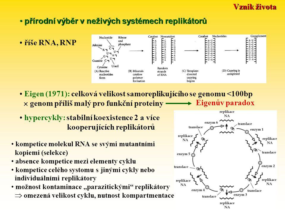 """Vznik života přírodní výběr v neživých systémech replikátorů říše RNA, RNP Eigenův paradox Eigen (1971): celková velikost samoreplikujícího se genomu <100bp  genom příliš malý pro funkční proteiny hypercykly: stabilní koexistence 2 a více kooperujících replikátorů kompetice molekul RNA se svými mutantními kopiemi (selekce) absence kompetice mezi elementy cyklu kompetice celého systomu s jinými cykly nebo individuálními replikátory možnost kontaminace """"parazitickými replikátory  omezená velikost cyklu, nutnost kompartmentace"""