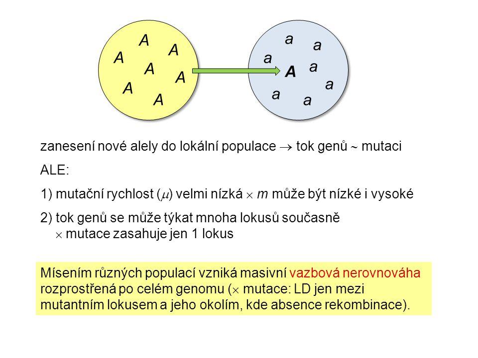 zanesení nové alely do lokální populace  tok genů  mutaci ALE: 1) mutační rychlost (  ) velmi nízká  m může být nízké i vysoké 2) tok genů se může týkat mnoha lokusů současně  mutace zasahuje jen 1 lokus Mísením různých populací vzniká masivní vazbová nerovnováha rozprostřená po celém genomu (  mutace: LD jen mezi mutantním lokusem a jeho okolím, kde absence rekombinace).