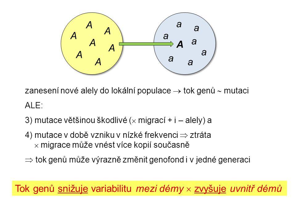zanesení nové alely do lokální populace  tok genů  mutaci ALE: 3) mutace většinou škodlivé (  migrací + i – alely) a 4) mutace v době vzniku v nízké frekvenci  ztráta  migrace může vnést více kopií současně  tok genů může výrazně změnit genofond i v jedné generaci Tok genů snižuje variabilitu mezi démy  zvyšuje uvnitř démů