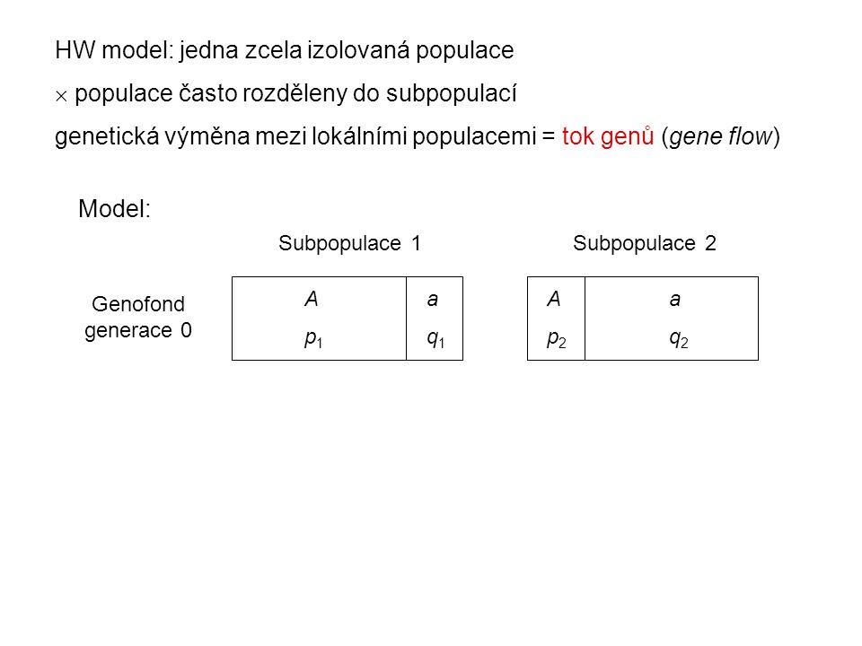 HW model: jedna zcela izolovaná populace  populace často rozděleny do subpopulací genetická výměna mezi lokálními populacemi = tok genů (gene flow) A a p 1 q 1 Subpopulace 1Subpopulace 2 Genofond generace 0 A a p 2 q 2 Model: