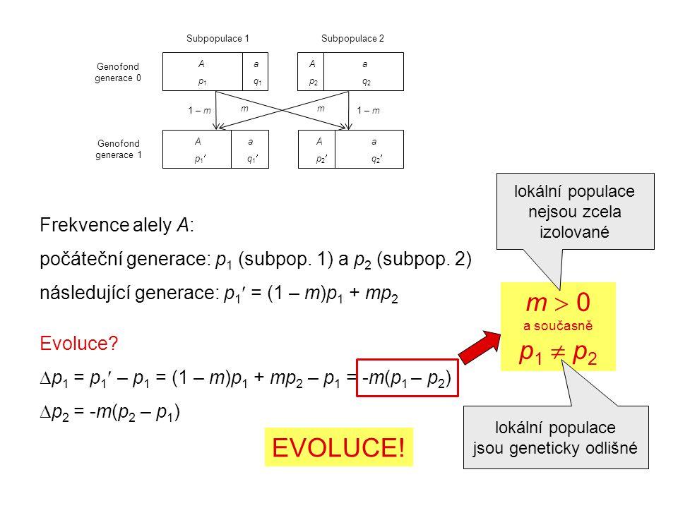 Frekvence alely A: počáteční generace: p 1 (subpop.