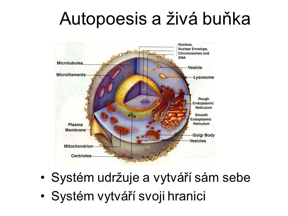 Autopoesis a živá buňka Systém udržuje a vytváří sám sebe Systém vytváří svoji hranici