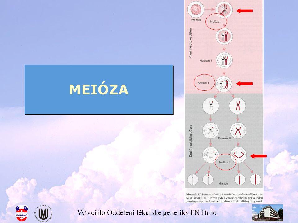 Vytvořilo Oddělení lékařské genetiky FN Brno MEIÓZA