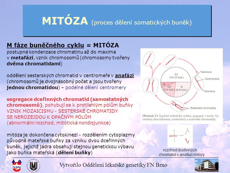 Vytvořilo Oddělení lékařské genetiky FN Brno ROZESTUP SESTERSKÝCH CHROMATID V ANAFÁZI MITÓZY M fáze = MITÓZA chromosomy v anafázi mitózy průběh rozchodu chromatid metafázní dvouchromatidový chromosom dva jednochromatidové chromosomy
