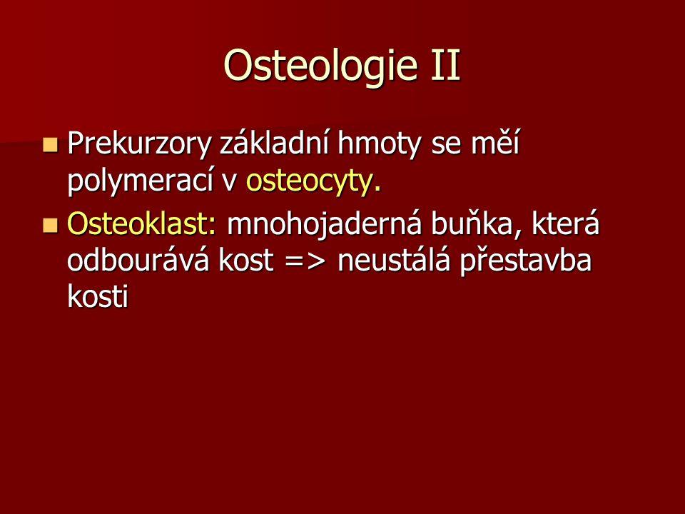 Osteologie II Prekurzory základní hmoty se měí polymerací v osteocyty. Prekurzory základní hmoty se měí polymerací v osteocyty. Osteoklast: mnohojader