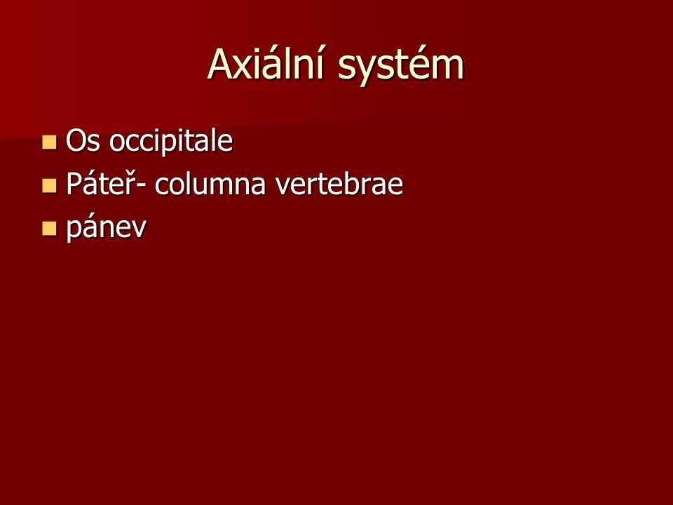 Axiální systém Os occipitale Os occipitale Páteř- columna vertebrae Páteř- columna vertebrae pánev pánev