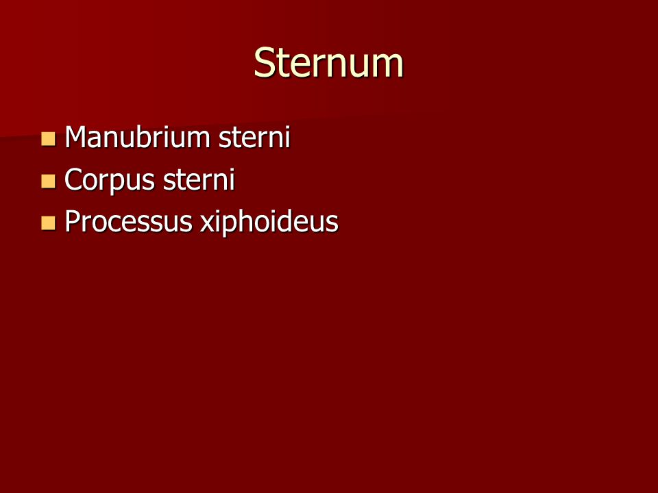Sternum Manubrium sterni Manubrium sterni Corpus sterni Corpus sterni Processus xiphoideus Processus xiphoideus