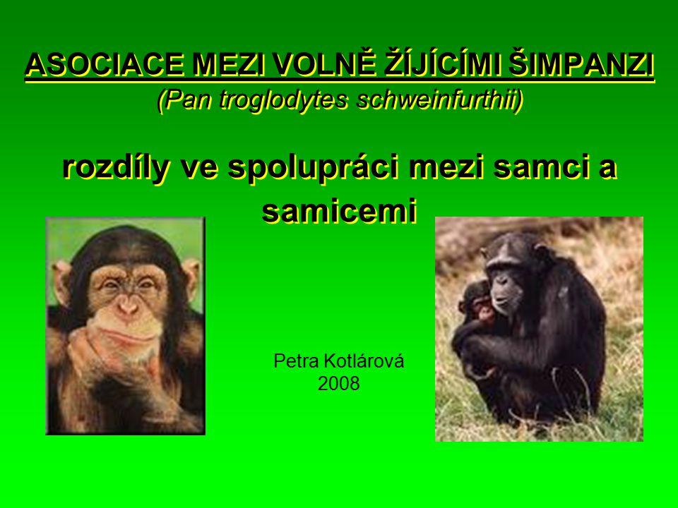 ASOCIACE MEZI VOLNĚ ŽÍJÍCÍMI ŠIMPANZI (Pan troglodytes schweinfurthii) rozdíly ve spolupráci mezi samci a samicemi Petra Kotlárová 2008