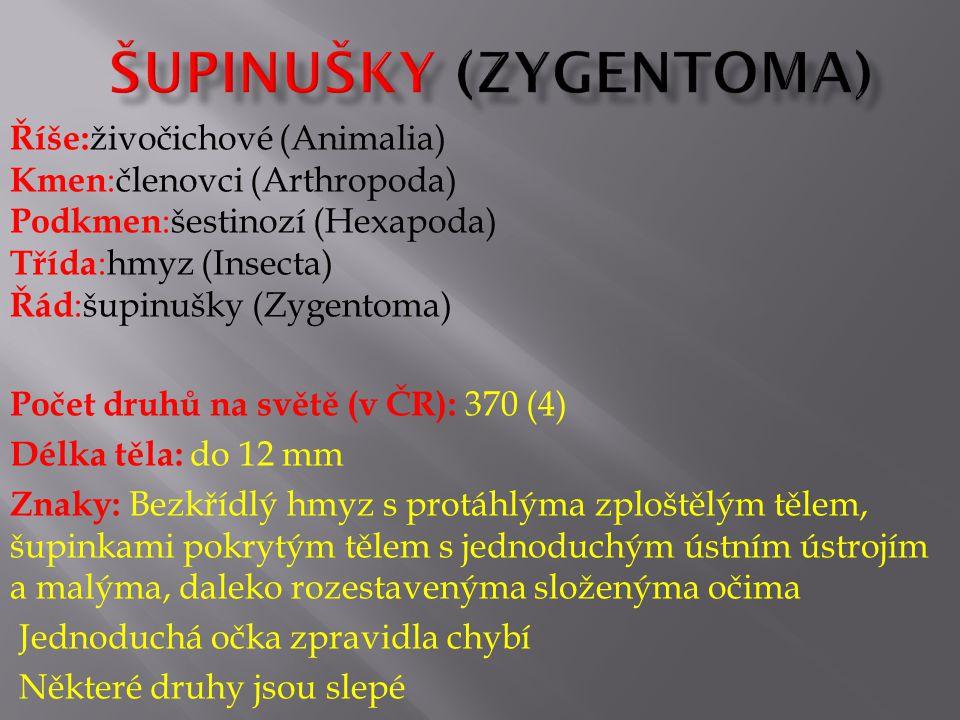 Říše: živočichové (Animalia) Kmen :členovci (Arthropoda) Podkmen :šestinozí (Hexapoda) Třída :hmyz (Insecta) Řád :šupinušky (Zygentoma) Počet druhů na světě (v ČR): 370 (4) Délka těla: do 12 mm Znaky: Bezkřídlý hmyz s protáhlýma zploštělým tělem, šupinkami pokrytým tělem s jednoduchým ústním ústrojím a malýma, daleko rozestavenýma složenýma očima Jednoduchá očka zpravidla chybí Některé druhy jsou slepé