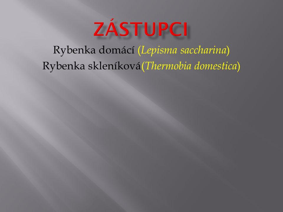 Rybenka domácí ( Lepisma saccharina ) Rybenka skleníková( Thermobia domestica )