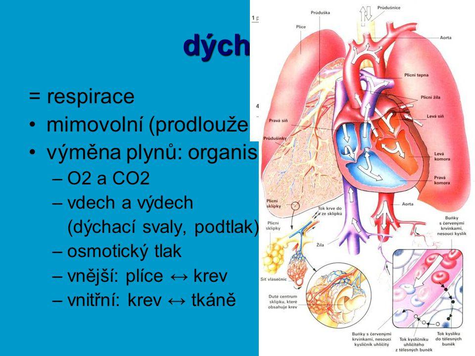 dýchání = respirace mimovolní (prodloužená mícha) výměna plynů: organismus ↔ prostředí –O2 a CO2 –vdech a výdech (dýchací svaly, podtlak) –osmotický tlak –vnější: plíce ↔ krev –vnitřní: krev ↔ tkáně