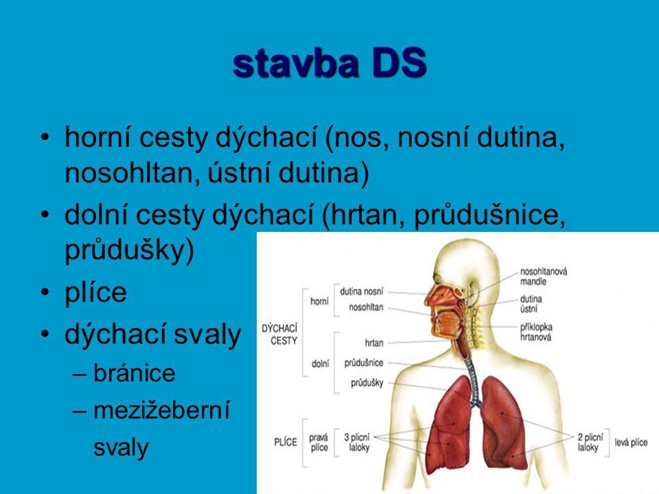 horní cesty dýchací dutina nosní (vestibulum nasi) –sliznice – lymfatická tkáň, čichové buňky –oteplení, zvlhčení, pročištění –vedlejší dutiny nosohltan (nasopharynx) –Eustachova trubice 1 – čelní dutina 2 – čichové sklípky 3 – klínová dutina 4 – čelistní dutina