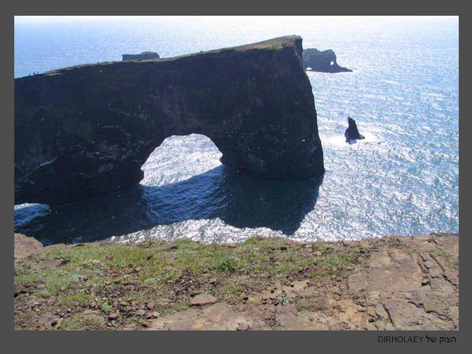 PAPAGEIENTAUCHER- בקיצור פפן תוכי הים של איסלנד