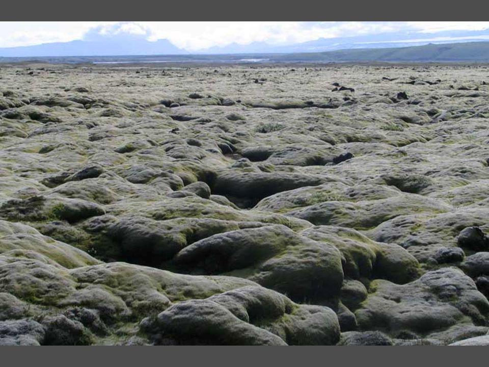 תופעה מיוחדת – טחב המכסה את סלעי הלבה כמו מוס