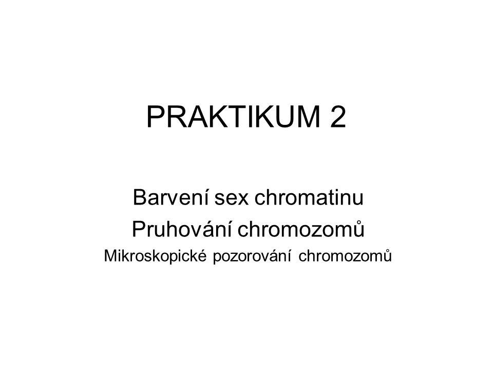 PRAKTIKUM 2 Barvení sex chromatinu Pruhování chromozomů Mikroskopické pozorování chromozomů