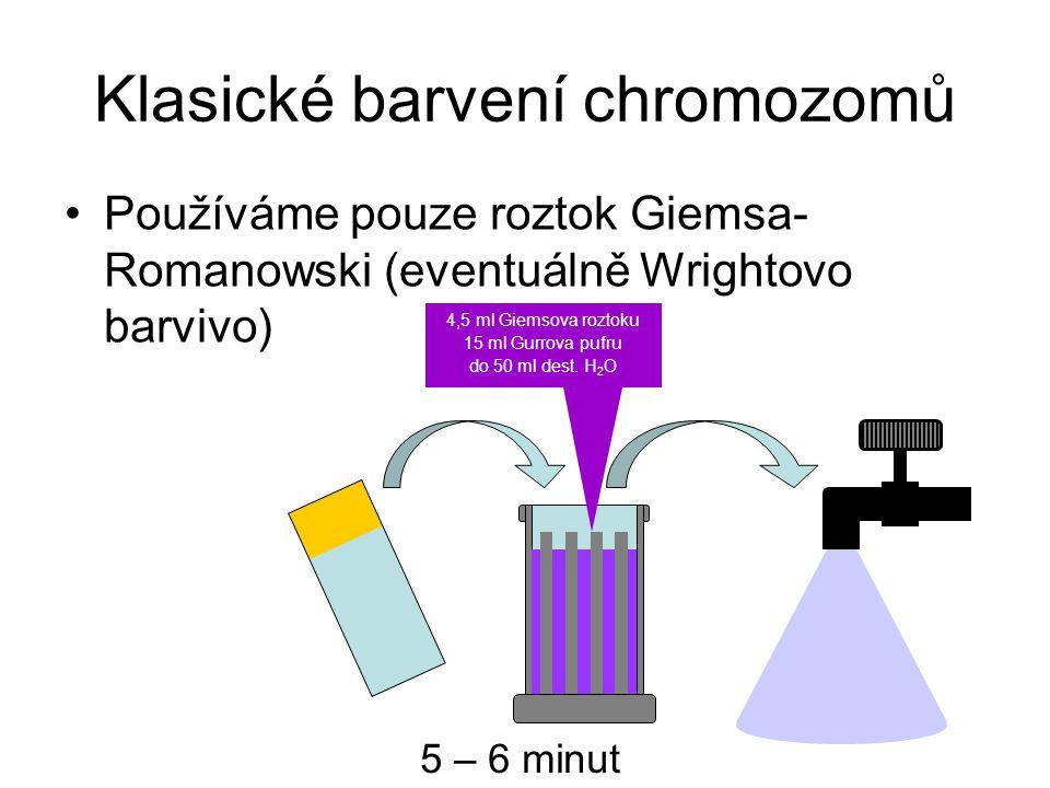 Klasické barvení chromozomů Používáme pouze roztok Giemsa- Romanowski (eventuálně Wrightovo barvivo) 5 – 6 minut 4,5 ml Giemsova roztoku 15 ml Gurrova