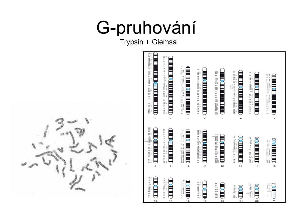 G-pruhování Trypsin + Giemsa