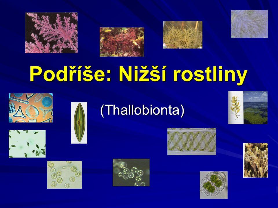 Podříše: Nižší rostliny (Thallobionta)