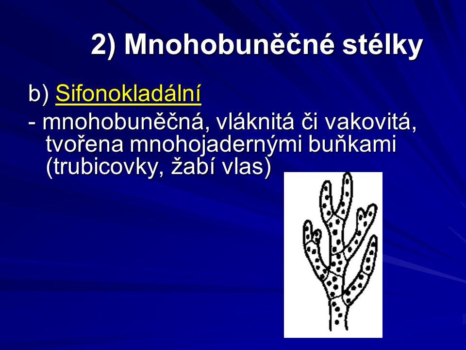 2) Mnohobuněčné stélky 2) Mnohobuněčné stélky b) Sifonokladální - mnohobuněčná, vláknitá či vakovitá, tvořena mnohojadernými buňkami (trubicovky, žabí