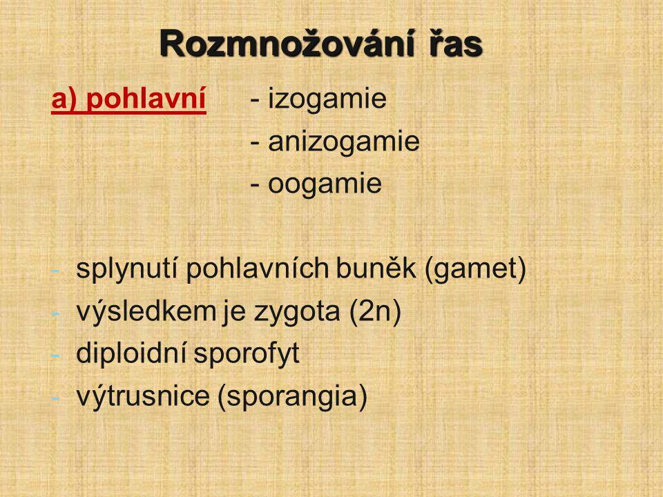 Rozmnožování řas a) pohlavní- izogamie - anizogamie - oogamie - - splynutí pohlavních buněk (gamet) - - výsledkem je zygota (2n) - - diploidní sporofy