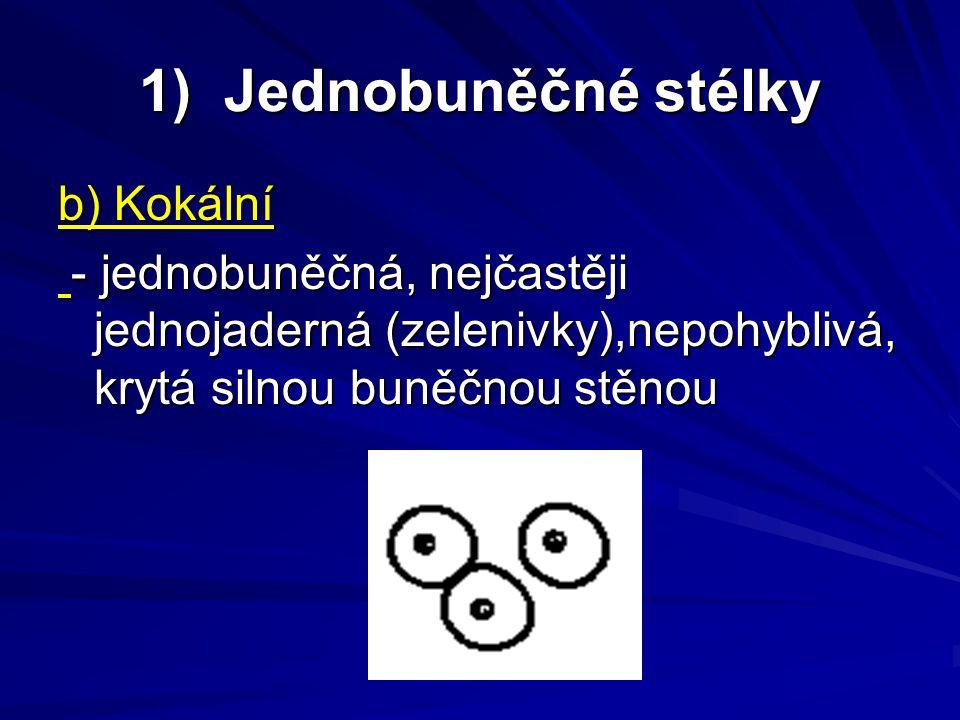 1) Jednobuněčné stélky b) Kokální - jednobuněčná, nejčastěji jednojaderná (zelenivky),nepohyblivá, krytá silnou buněčnou stěnou - jednobuněčná, nejčas